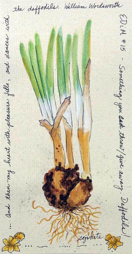 sketch of daffodil bulbs